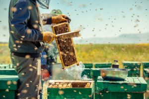 Beekeeper using bee brush