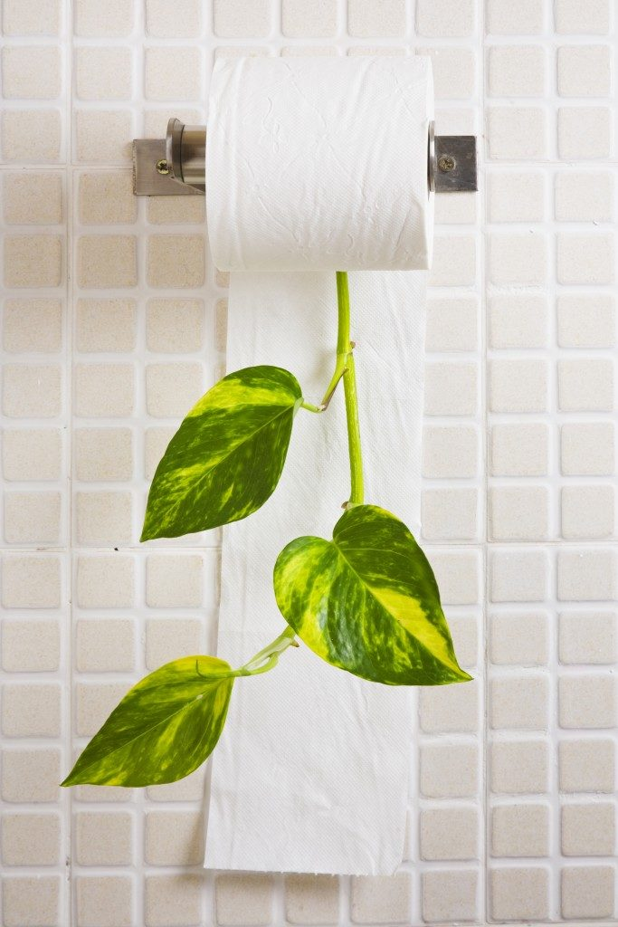 eco-friendly tissue paper